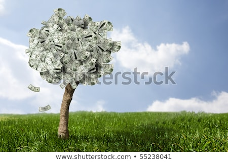 Money Growing on a Tree - Euros Stock photo © iqoncept