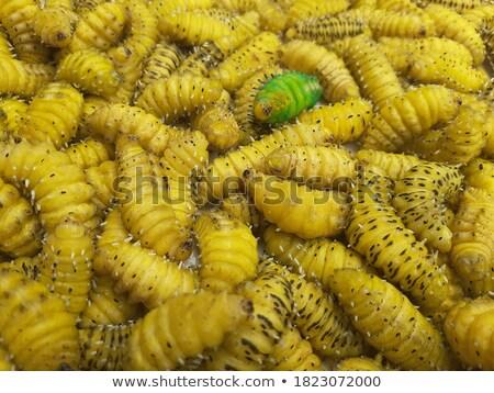 many silkworms texture eating mulberry leaves Stock photo © lunamarina