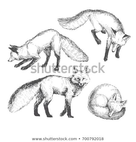 Fox · tête · vecteur · dessin · rouge · affaires - photo stock © hermione