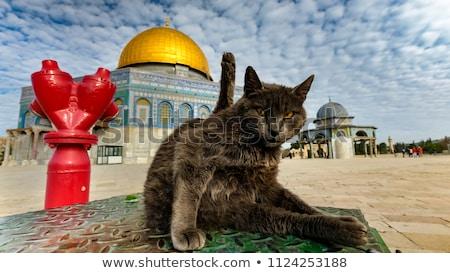 Fekete macska Jeruzsálem Izrael óváros macska épületek Stock fotó © travelphotography