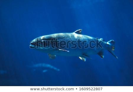 The Atlantic Ocean Stock photo © ollietaylorphotograp