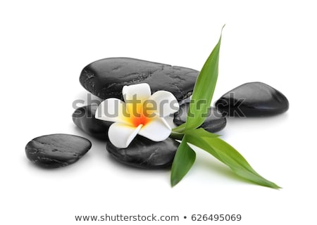 Spa stones   on green leaf, with flower Stock photo © Geribody