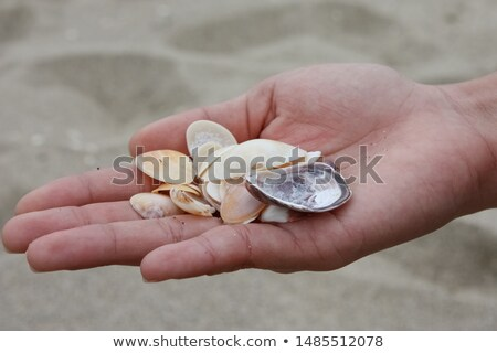 menina · enterrado · areia · olhando · praia · criança - foto stock © monkey_business