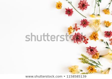 beyaz · turuncu · çiçekler · kokulu - stok fotoğraf © sarahdoow