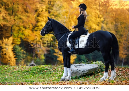 attractive blonde training the horse stock photo © konradbak