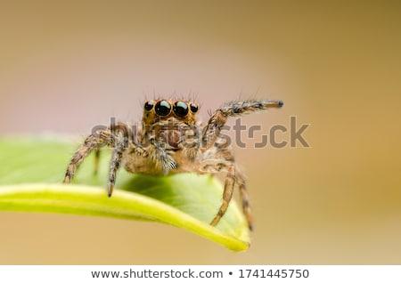 Foto stock: Saltando · aranha · pequeno · ocultação · grande