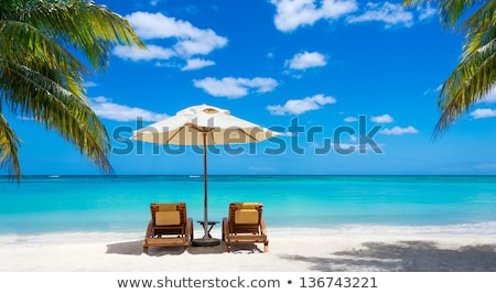 Palm Tree, Beach and Deckchairs Stock photo © artybloke