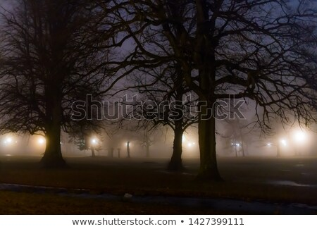 Foggy night in the park Stock photo © icefront