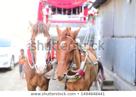 Colonial horse carriage with couple Stock photo © phakimata