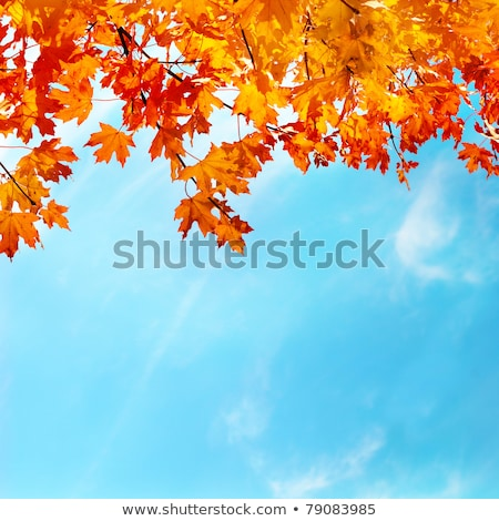 autumn leaves on the blue sky background stock photo © ultrapro