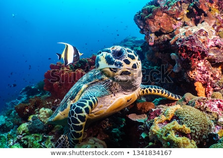 черепахи · рыбы · пейзаж · морем · фон - Сток-фото © mikko