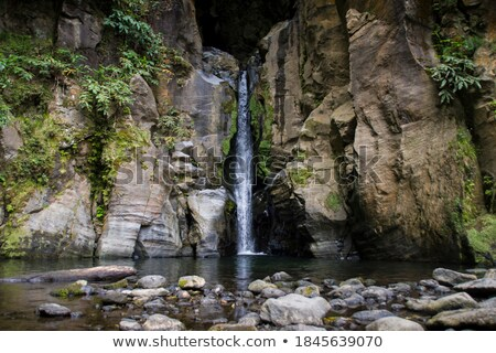 Rainforest on rocky cliff Stock photo © smithore