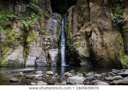 Rainforest on rocky cliff Stock photo © smithore
