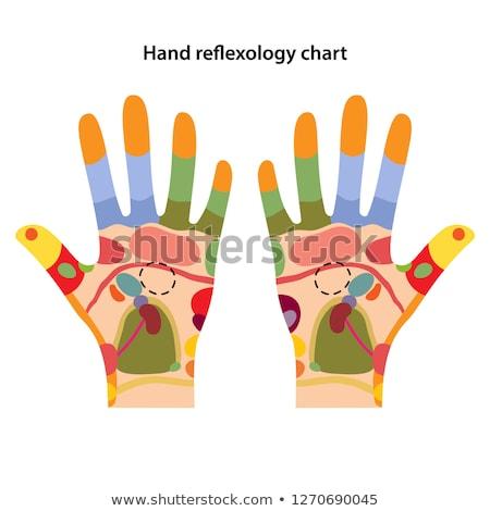 Reflexology hand chart Stock photo © adrenalina