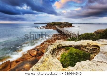 日の出 · 植物学 · オーストラリア · ラ · シドニー - ストックフォト © lovleah