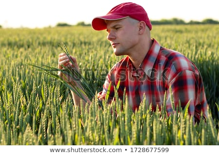 Farmer Examines and Controls Young Wheat Cultivation Field Stock photo © stevanovicigor