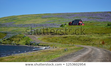 Gravel road surrounded of lupines Stock photo © olandsfokus