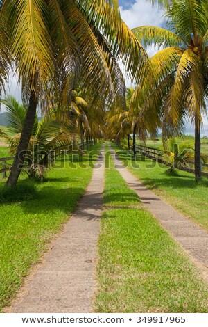 banana · plantação · tiro · árvore · fruto - foto stock © capturelight