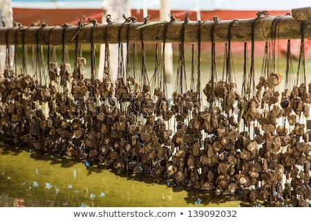 Fish and mussel farm Stock photo © smuki