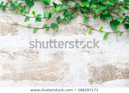 A stonewall with leaves Stock photo © bluering