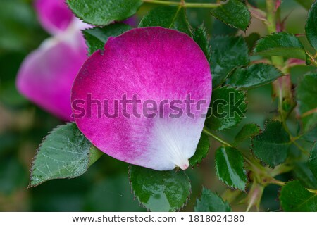 natural bush potpourri stock photo © lovleah