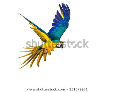 Colorful Ara Parrot isolated on white Stock photo © kayros