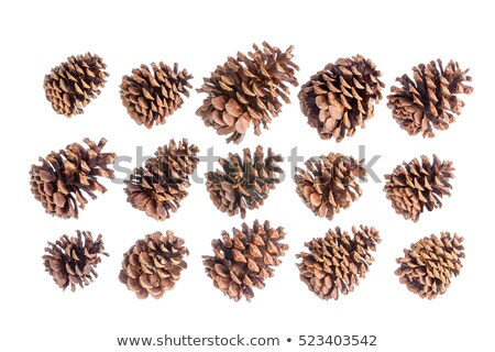 Selection of fifteen different brown pine cones Stock photo © ozgur