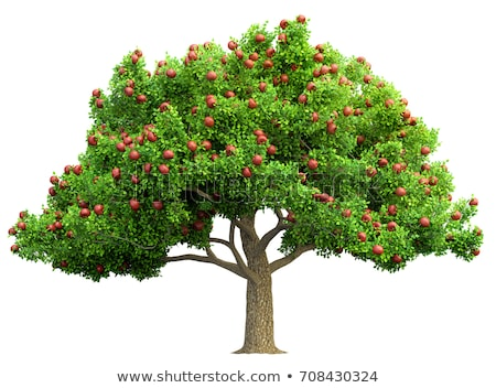illustration of isolated apple tree on white background stock photo © Natali_Brill