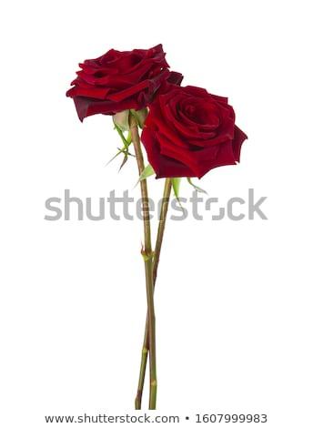 Iki güller siyah beyaz çiçek Stok fotoğraf © blackmoon979