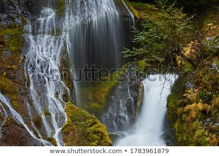Panther · ручей · лес · Вашингтон · природы · водопада - Сток-фото © davidgn