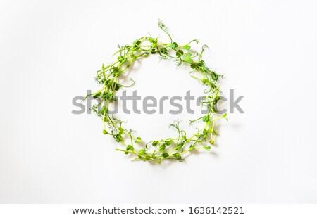 Vert bol alimentaire salade légumes fraîches Photo stock © Digifoodstock