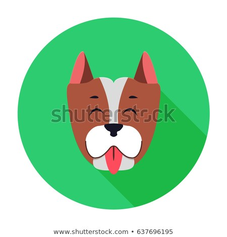 Funny Muzzle of Staffordshire Terrier Flat Theme Stock photo © robuart