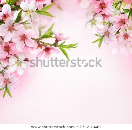 pêssego · primavera · flores · jardim - foto stock © oleksandro