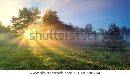 Foto stock: Sol · campo · colinas · amanecer · vintage