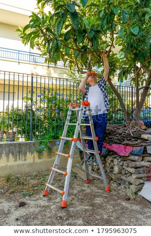 Man pruning trees in garden on stepladder Stock photo © IS2