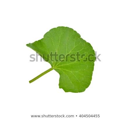 Pozostawia świeże organiczny drewna powierzchnia żywności Zdjęcia stock © bdspn