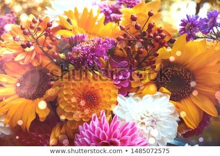 Stock photo: Dahlia and sunflowers