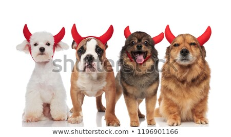 cute group of four different devil dogs with red horns stock photo © feedough