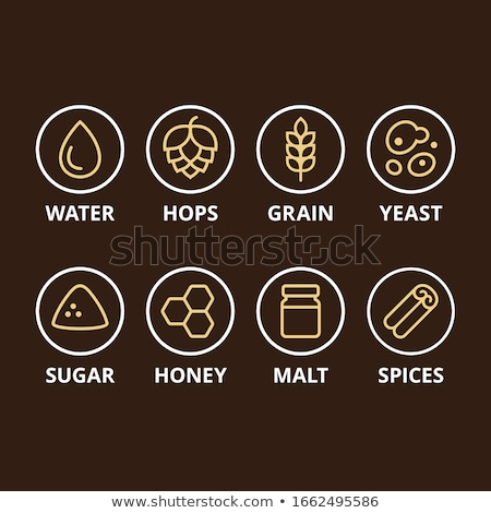 Wheat Beer Basic Ingridient Vector Illustration Stock photo © robuart