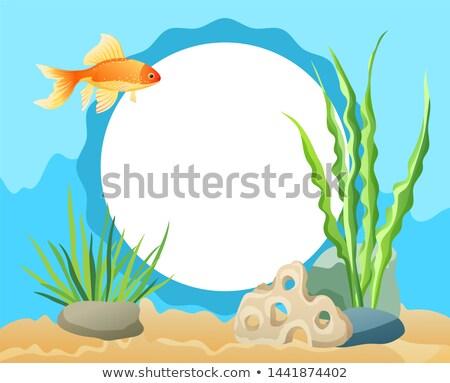 Foto stock: Peixe-dourado · natação · alga · pedras · areia · aquário