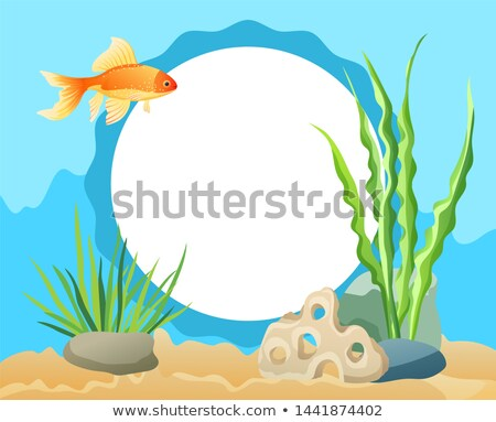 goldfish swimming among seaweed stones and sand stock photo © robuart
