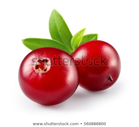Cranberry branch composition, clipping paths Stock photo © maxsol7