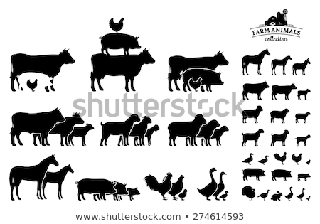 Cow and Pig Swine on Farm Vector Illustration Stock photo © robuart
