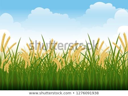 農民 · フィールド · 画像 · 2 · 幸せ · 背景 - ストックフォト © galitskaya