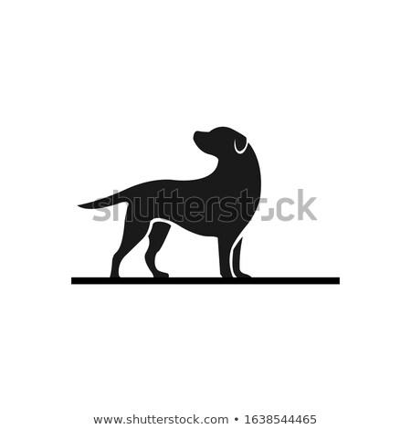 vector sketch of elegant dog stock photo © netkov1