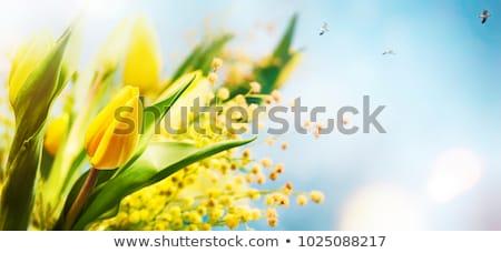spring season tulip in a beautiful meadow nature background happy spring day stock photo © elenabatkova