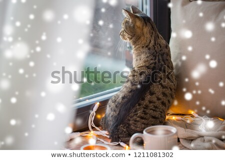 tabby cat looking through window at home over snow Stock photo © dolgachov
