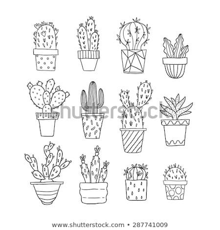 Stock fotó: Aranyos · kézzel · rajzolt · rajz · firka · kaktusz · szett