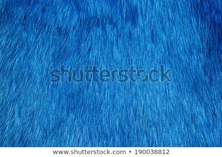 青 毛皮 テクスチャ 抽象的な ストックフォト © neirfy
