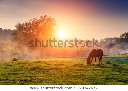 lovak · testtartás · ősz · jelenet · erdő · ló - stock fotó © goce